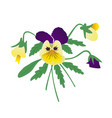 bouquet pansies yellow and purple petals vector image vector image