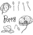 flower details buds stems and poppies contour vector image vector image
