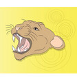 portrait of a cougar looking at wall vector image vector image
