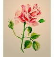 Rose watercolour vector image vector image