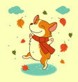 dog jumping on the autumn puddles welsh vector image vector image