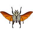 goliathus albosignatus beetle vector image
