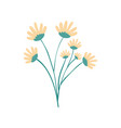 hand drawing yellow color daisy flower bouquet vector image