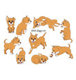 little doggy set vector image