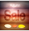 Autumn Sale title on wood with leaves vector image
