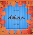 autumn card sale banner with maple leaves frame vector image vector image