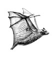 hand drawn flying fox isolated on white background vector image