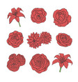 hand drawn set of red rose lily peony flowers vector image
