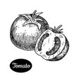 hand drawn sketch style tomato vector image vector image