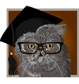 Persian cat with glasses and cap graduate vector image