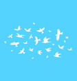 silhouette black fly birds on a blue vector image