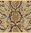 snakeskin seamless pattern realistic texture of vector image vector image