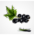 blackcurrant vector image vector image