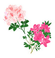 branches light pink and pink flowers vector image vector image
