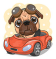 cartoon pug dog boy in glasses goes on a red car vector image