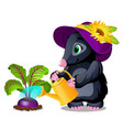 cute animated mole watering beets from watering vector image vector image