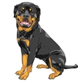 dog Rottweiler breed vector image vector image