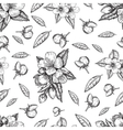 Seamless pattern flowers and leaves of the apple vector image vector image