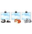three banner template with cute animals vector image vector image