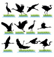 cranes vector image