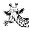 cute giraffe with a flower sticker on wall vector image