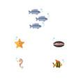 flat icon sea set of sea star hippocampus vector image