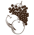 fruit graphic vector image vector image