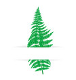 card with green fern vector image vector image