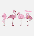 pink flamingo hand drawn birds sketch vector image