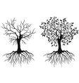 Trees with roots vector image