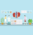 human kidney anatomy science analysis health on vector image