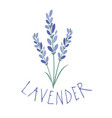 lavender flower logo design text hand drawn vector image vector image