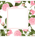 pink rose on white banner card vector image vector image