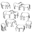 set of horses vector image vector image