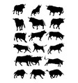 bulls animal silhouette vector image
