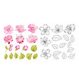 Collection cherry flowers set cherry blossom