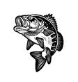 largemouth bass fish carnivorous freshwater vector image