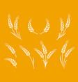natural white wheat ears icon logo set vector image