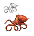 octopus sea animal sketch of red ocean mollusk vector image