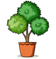 Pot with a plant vector image vector image