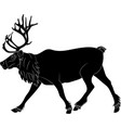 reindeer running on white background vector image vector image