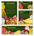 templates of tropical exotic fruits vector image vector image