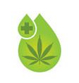 cbd oil cannabis extract vector image vector image