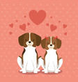 dogs couple pet friendly vector image