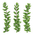 set silhouettes a branches boxwood buxus vector image