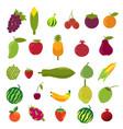 flat design fruits icon set vector image