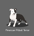 american pitbull terrier pet cartoon graphic vector image