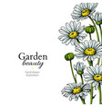 daisy flower border drawing hand drawn vector image vector image