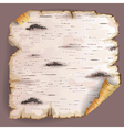 Piece of birch bark vector image vector image