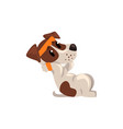cute jack russell terrier athlete doing exercises vector image